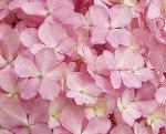 inoriflower03.jpg